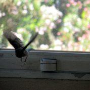 הציפור שההשתתפה בסדנת תטא הילינג
